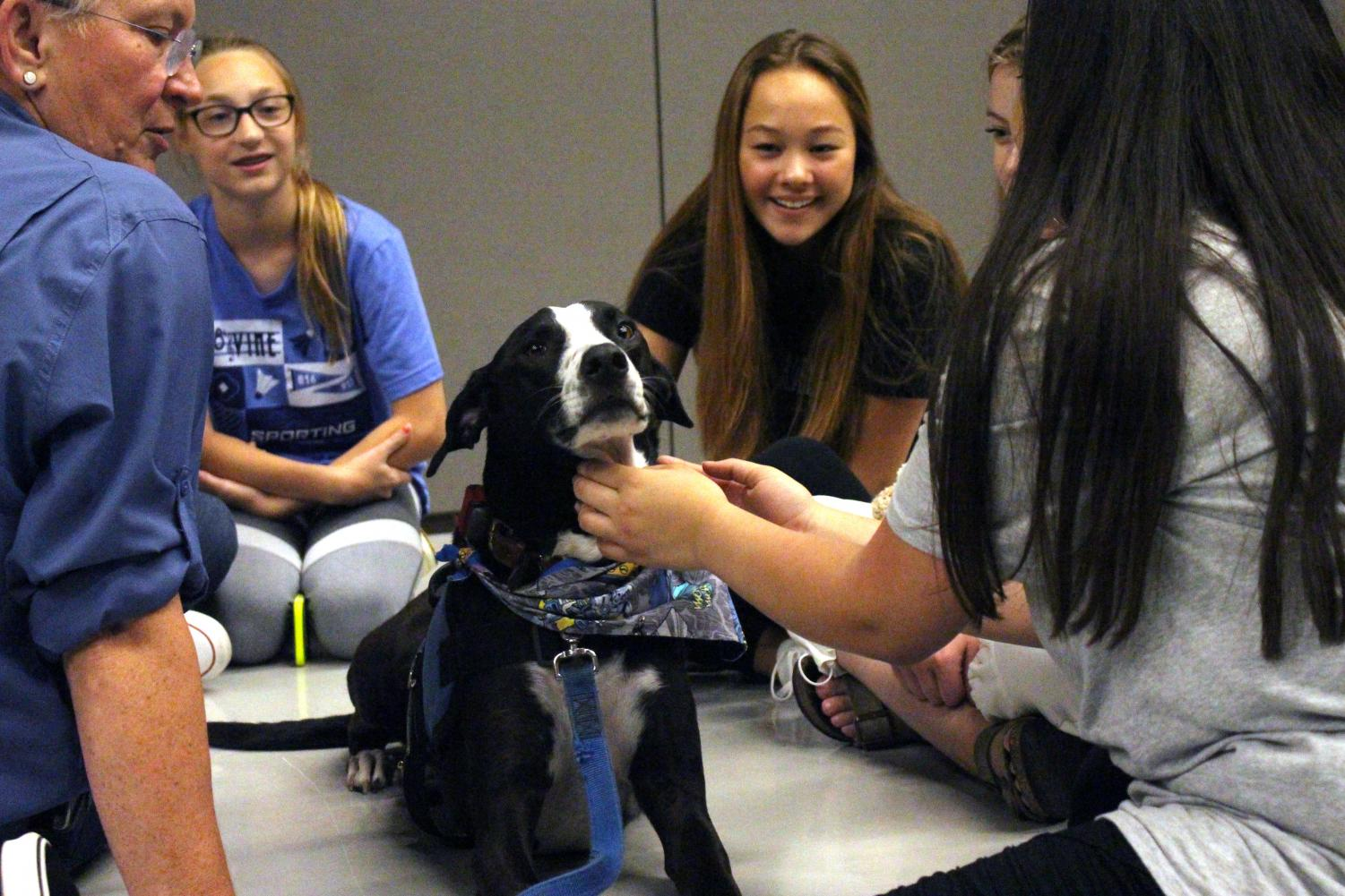 Therapy dog Murphy also was included in the Power 50 session.